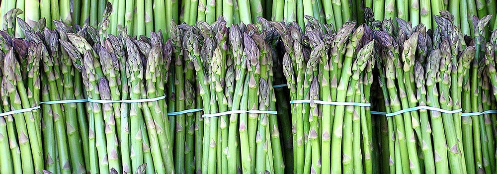 Bunches of asparagus ready for freezing, drying, or canning.