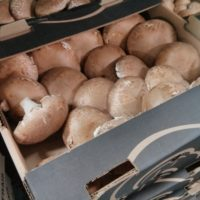 5lb box of local portobello mushrooms