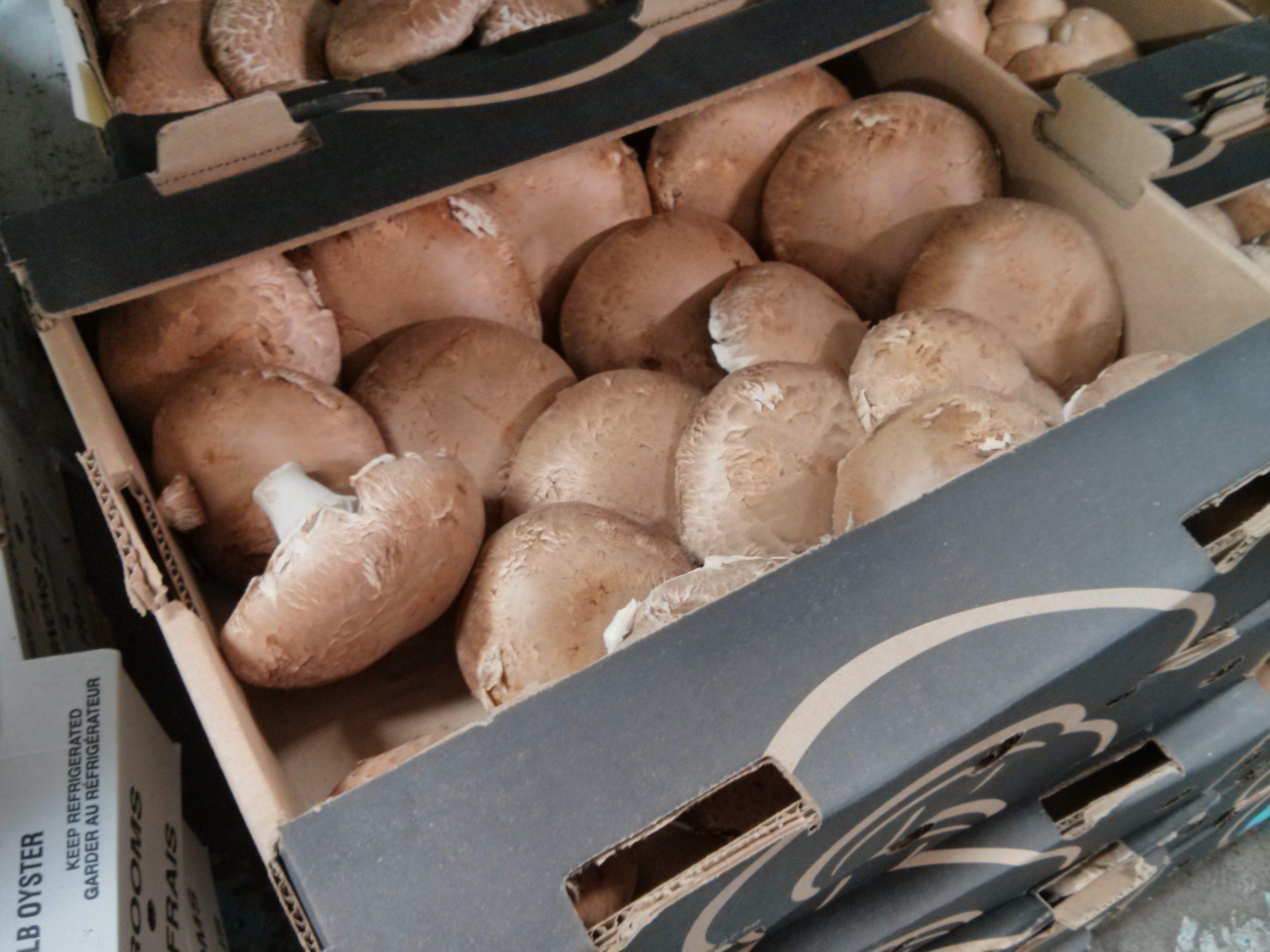 5lb box of local portobello mushrooms